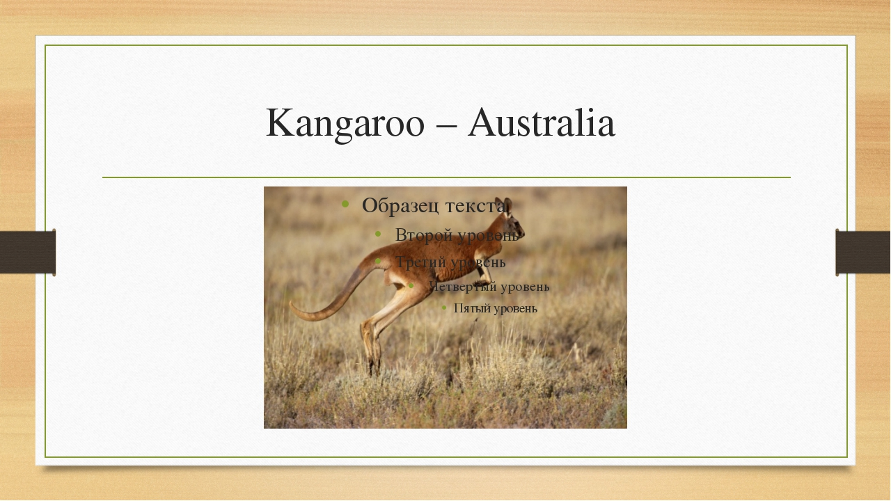 Kangaroo – Australia