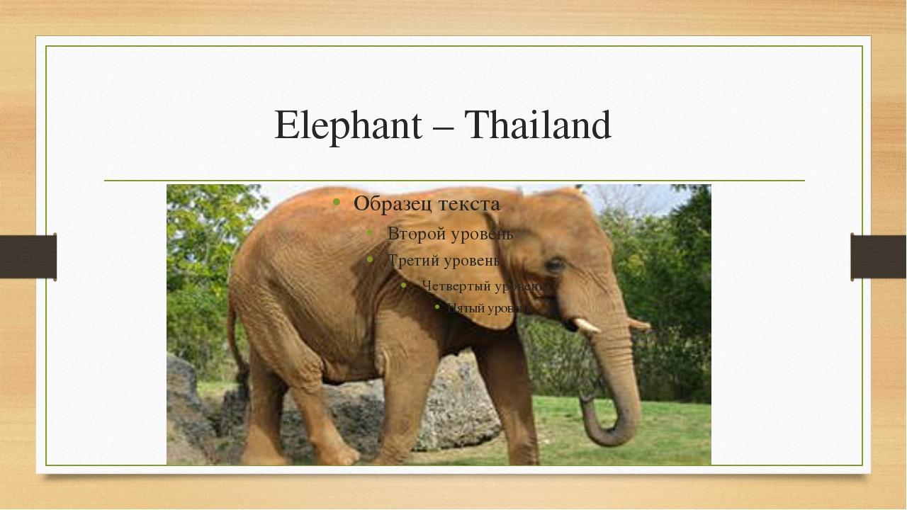 Elephant – Thailand