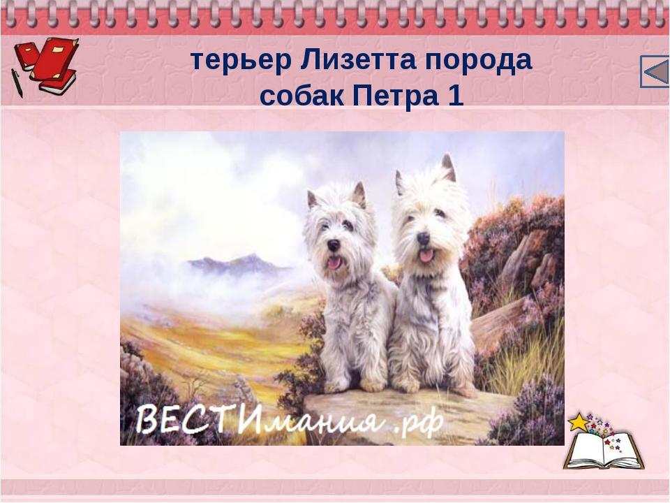 терьер Лизетта порода собак Петра 1