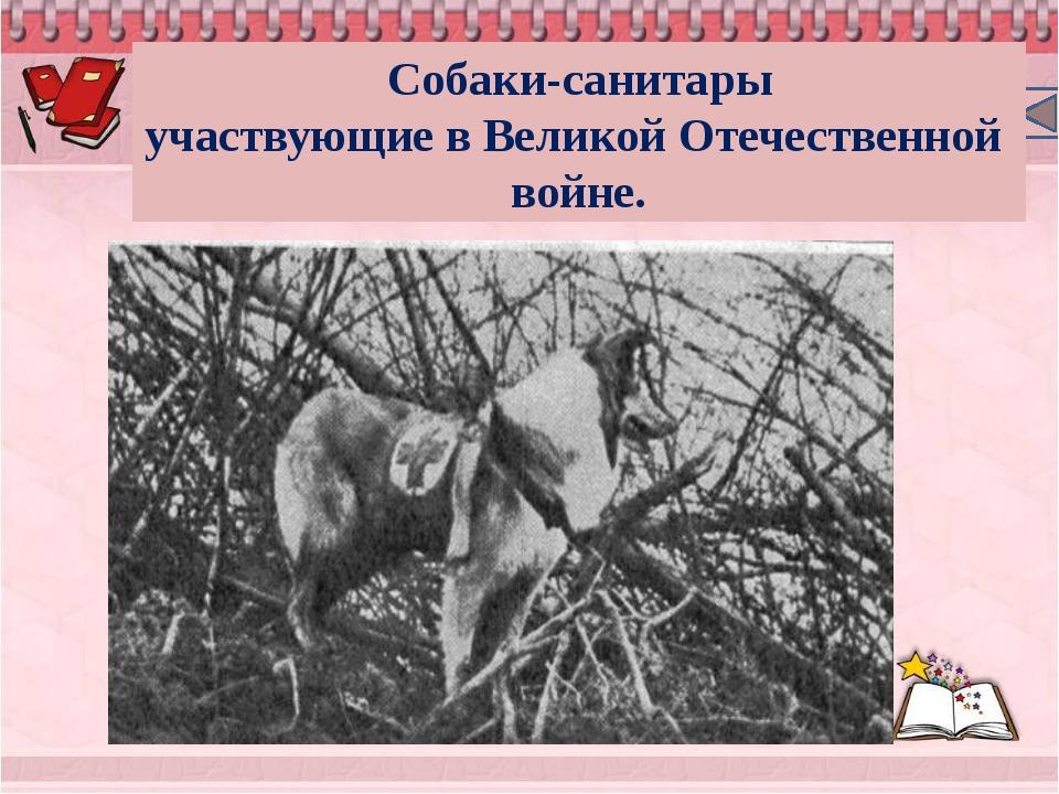 Собаки-санитары участвующиевВеликойОтечественнойвойне.