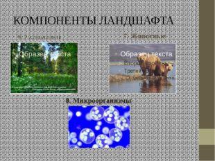 КОМПОНЕНТЫ ЛАНДШАФТА 6. Растительность 7. Животные 8. Микроорганизмы