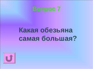 Вопрос 7 Какая обезьяна самая большая?