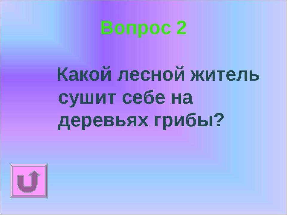 Вопрос 2 Какой лесной житель сушит себе на деревьях грибы?
