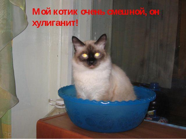 Мой котик очень смешной, он хулиганит!