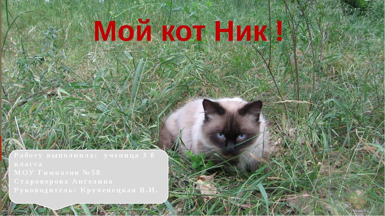 Мой кот Ник ! Работу выполнила: ученица 3 б класса МОУ Гимназия №58 Староверо...