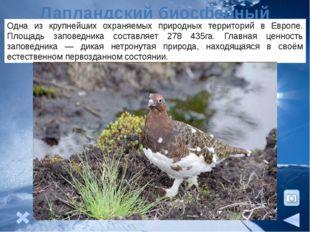 Природные ресурсы На северо-востоке района расположен Печорский угольный бас