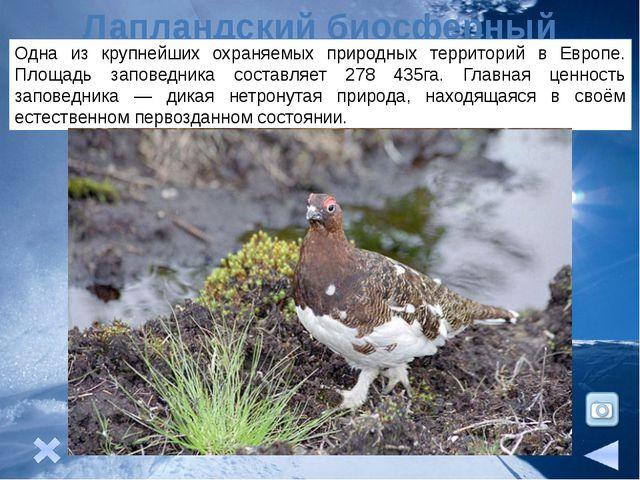 Природные ресурсы На северо-востоке района расположен Печорский угольный бас...