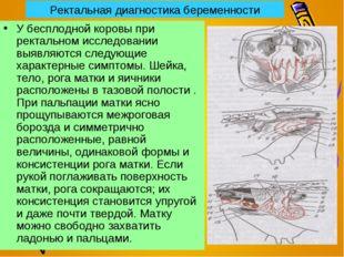 Ректальная диагностика беременности У бесплодной коровы при ректальном исслед