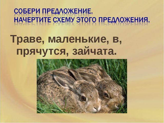 Траве, маленькие, в, прячутся, зайчата.