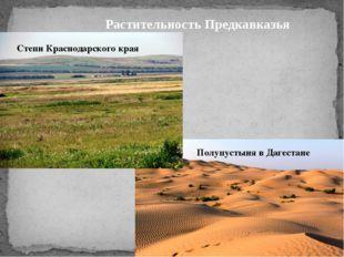Растительность Предкавказья Степи Краснодарского края Полупустыня в Дагестане