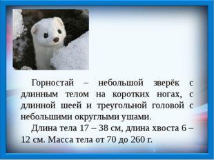 Горностай – небольшой зверёк с длинным телом на коротких ногах, с длинной ше