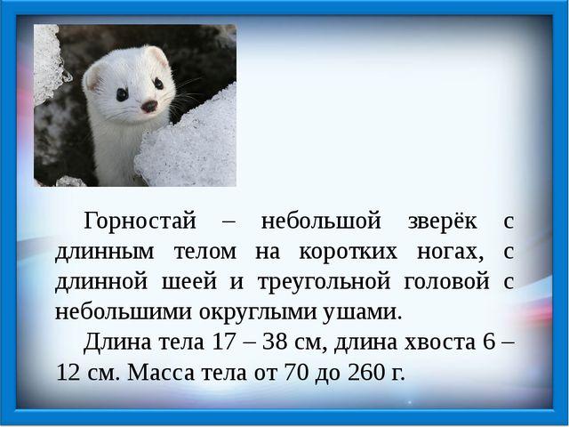 Горностай – небольшой зверёк с длинным телом на коротких ногах, с длинной ше...