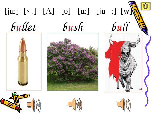 [ju:] [u:] [υ] [Λ] [ə:] [juə :] [w] bush bullet bull
