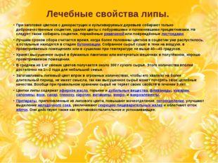 Лечебные свойства липы. При заготовке цветков с дикорастущих и культивируемых