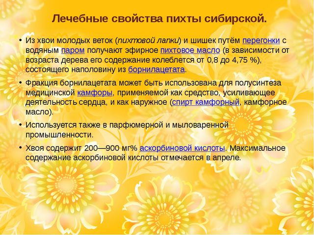 Лечебные свойства пихты сибирской. Из хвои молодых веток (пихтовой лапки) и ш...