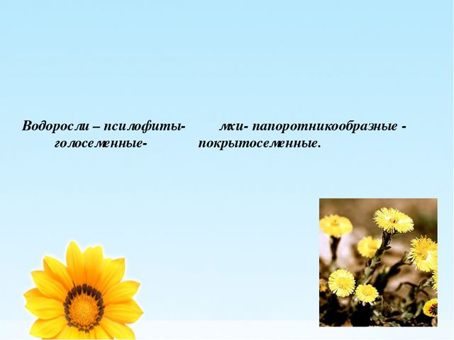 Водоросли – псилофиты- мхи- папоротникообразные - голосеменные- покрытосеменн...