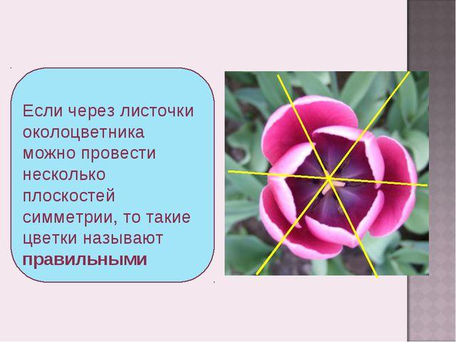 Если через листочки околоцветника можно провести несколько плоскостей симметр...