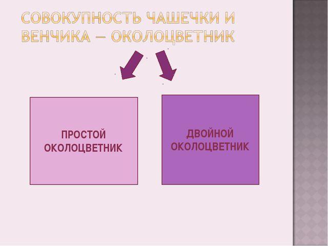 ПРОСТОЙ ОКОЛОЦВЕТНИК ДВОЙНОЙ ОКОЛОЦВЕТНИК