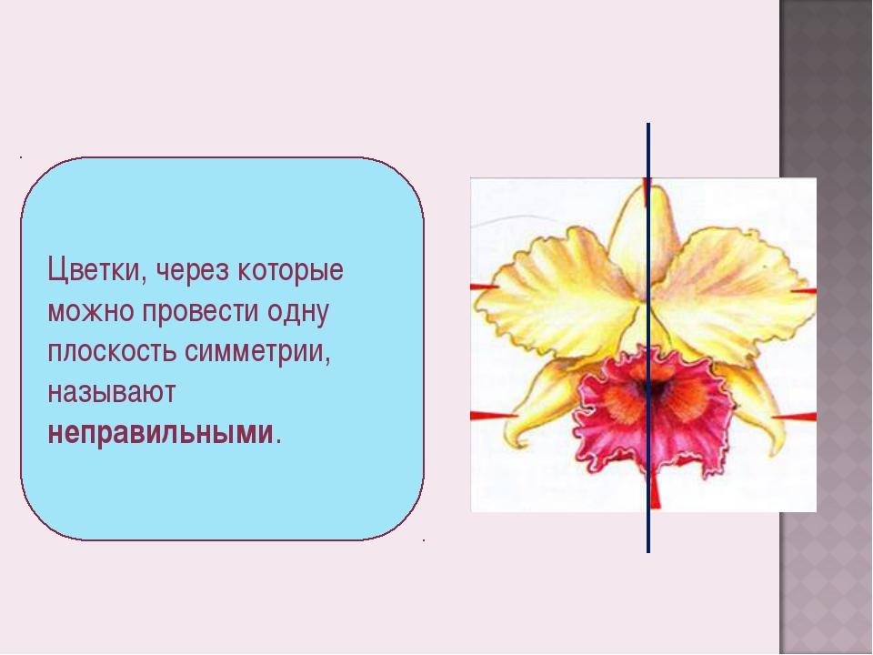 Цветки, через которые можно провести одну плоскость симметрии, называют непра...