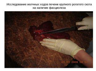 Исследование желчных ходов печени крупного рогатого скота на наличие фасциолеза