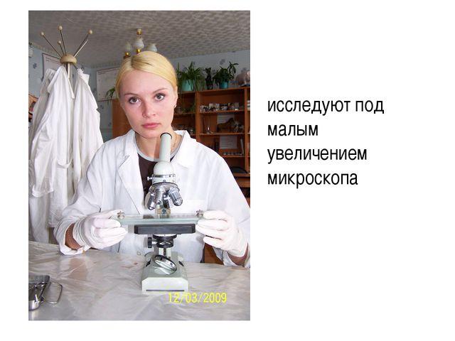исследуют под малым увеличением микроскопа