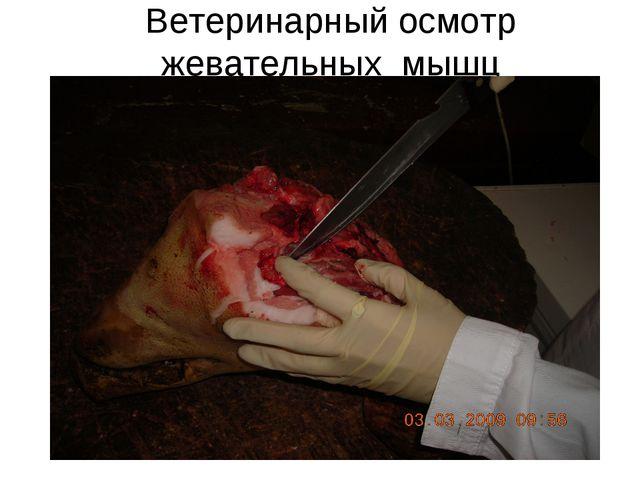 Ветеринарный осмотр жевательных мышц