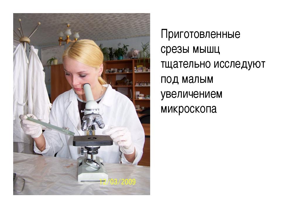Приготовленные срезы мышц тщательно исследуют под малым увеличением микроскопа