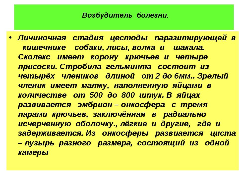 Возбудитель болезни. Личиночная стадия цестоды паразитирующей в кишечнике со...