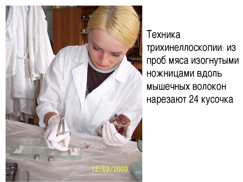 Техника трихинеллоскопии: из проб мяса изогнутыми ножницами вдоль мышечных в...