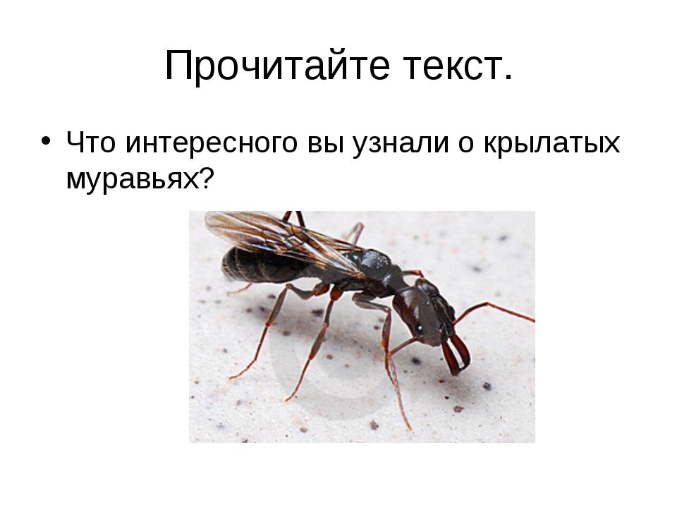 Прочитайте текст. Что интересного вы узнали о крылатых муравьях?