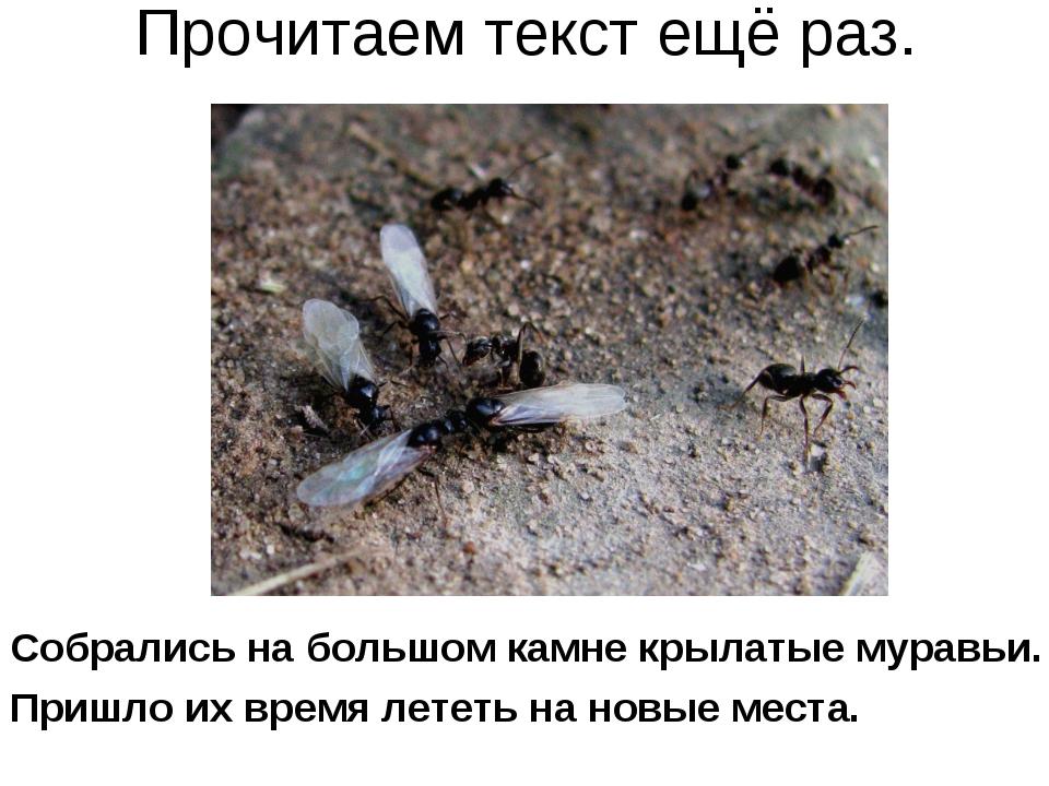 Прочитаем текст ещё раз. Собрались на большом камне крылатые муравьи. Пришло...