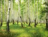 http://s100.fotosklad.org.ua/20131219/b507e5cba40d5a3bd717677f9eafae64.jpg