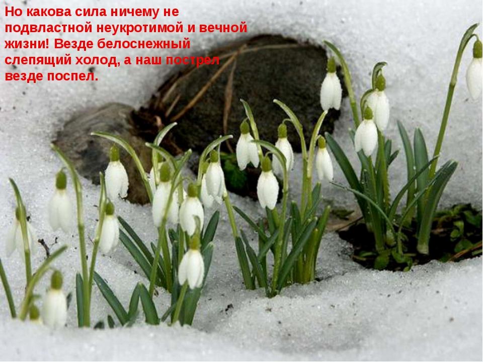Но какова сила ничему не подвластной неукротимой и вечной жизни! Везде белосн...