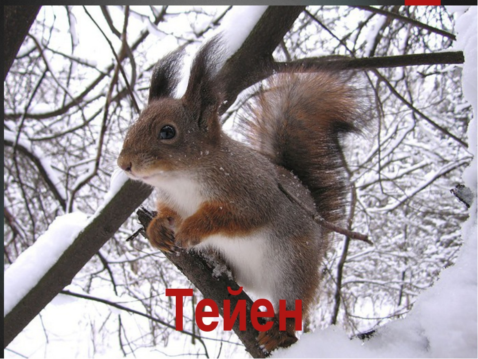 Тейен