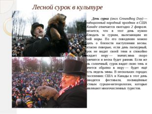 Лесной сурок в культуре День сурка (англ. Groundhog Day) — традиционный народ