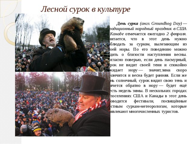 Лесной сурок в культуре День сурка (англ. Groundhog Day) — традиционный народ...