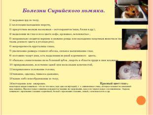 Болезни Сирийского хомяка. 1) выражен зуд по телу; 2 )аллопеция выпадение шер