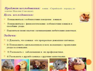 Предмет исследования: хомяк «Сирийской» породы, по кличке Максим (6 месяцев).