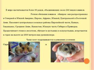 В мире насчитывается более 60 родов, объединяющих около 240 видов хомяков. Р