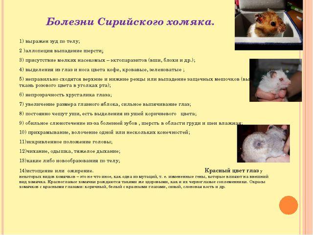 Болезни Сирийского хомяка. 1) выражен зуд по телу; 2 )аллопеция выпадение шер...