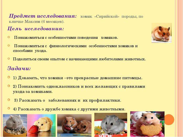 Предмет исследования: хомяк «Сирийской» породы, по кличке Максим (6 месяцев)....