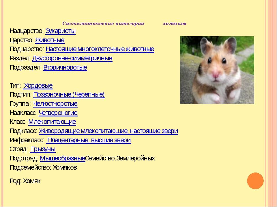 Систематические категории хомяков