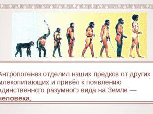 Антропогенез отделил наших предков от других млекопитающих и привёл к появлен