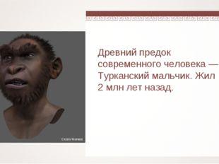 Древний предок современного человека — Турканский мальчик. Жил 2 млн лет наза