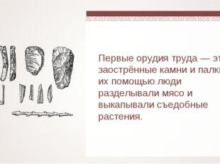 Первые орудия труда — это заострённые камни и палки. С их помощью люди раздел