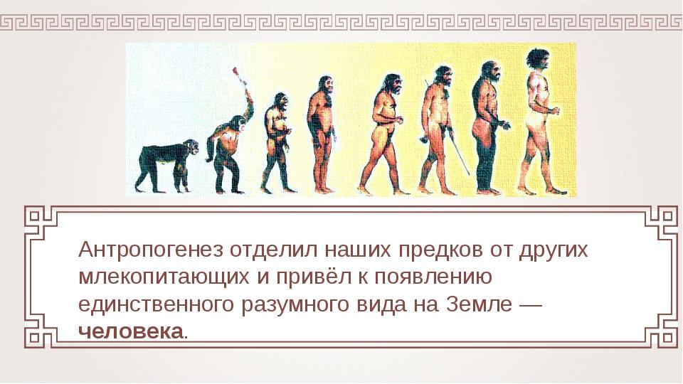 Антропогенез отделил наших предков от других млекопитающих и привёл к появлен...