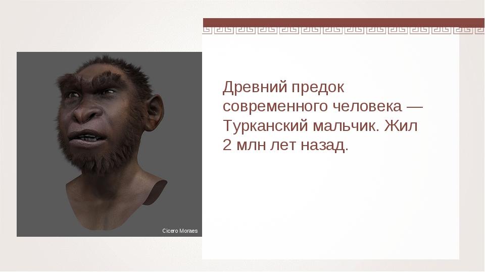Древний предок современного человека — Турканский мальчик. Жил 2 млн лет наза...