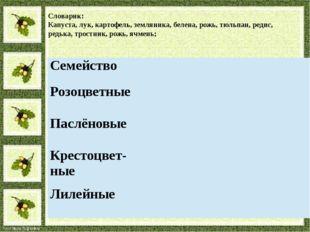 Словарик: Капуста, лук, картофель, земляника, белена, рожь, тюльпан, редис, р