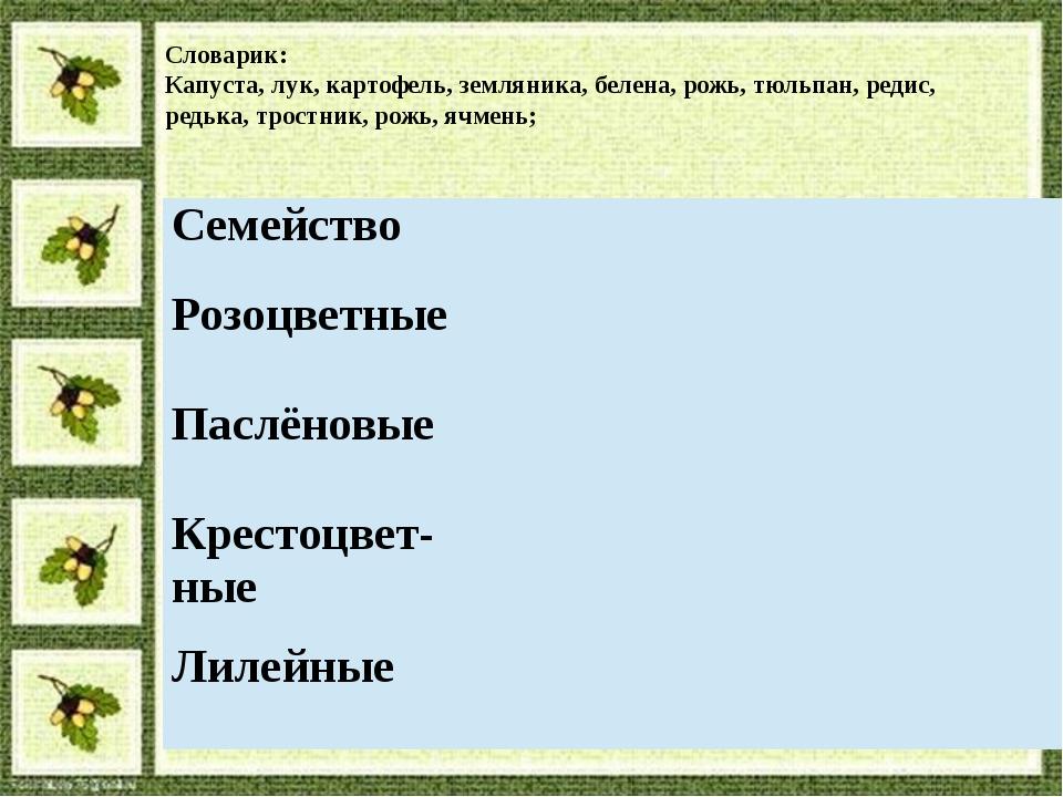 Словарик: Капуста, лук, картофель, земляника, белена, рожь, тюльпан, редис, р...