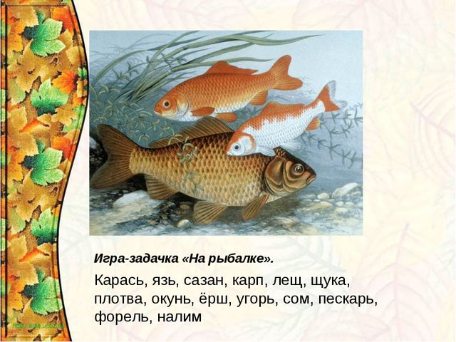 Игра-задачка «На рыбалке». Карась, язь, сазан, карп, лещ, щука, плотва, окунь...